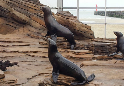 Californian Reserve for sea Lions